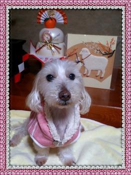 2015-01-01-18-31-42_deco.jpg